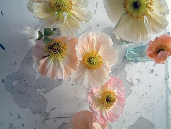 Poppies1-560x422