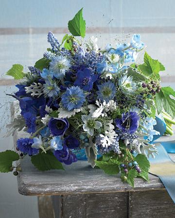 Mw105244_0110_bluebq1_xl-1