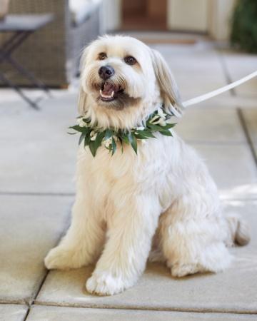 Dog-mwd109296_vert